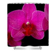 Mottled Orchid 8 Shower Curtain