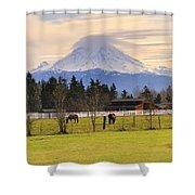 Mount Rainier And Grazing Horses Shower Curtain