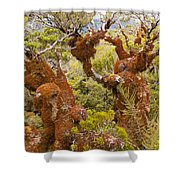 Mountain Beech Rain Forest In Fjordland Np Nz Shower Curtain