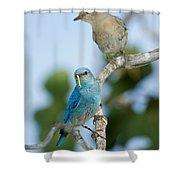 Mountain Bluebird Pair Shower Curtain