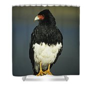 Mountain Caracara Shower Curtain