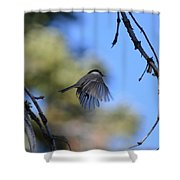 Mountain Chickadee Shower Curtain