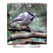Mountain Chickadee On A Rainy Day Shower Curtain