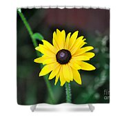 Mountain Daisy Yellow Shower Curtain