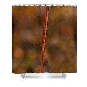 Mountain Dandelion   #3581 Shower Curtain