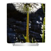 Mountain Dandelion Shower Curtain