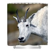 Mountain Goat Feeding Shower Curtain