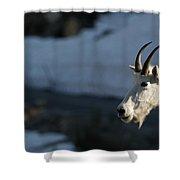 Mountain Goat Glacier National Park Shower Curtain