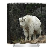 Mountain Goat Kid Shower Curtain