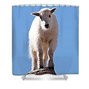 Mountain Goat Kid On Mount Evans Shower Curtain