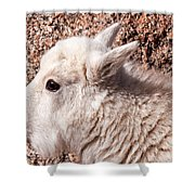 Mountain Goat Kid Portrait On Mount Evans Shower Curtain