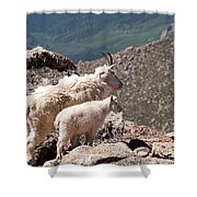 Mountain Goat Nanny And Kid Enloying The View On Mount Evans Shower Curtain