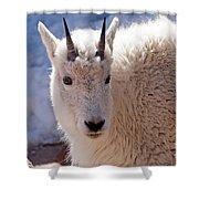 Mountain Goat Portrait On Mount Evans Shower Curtain