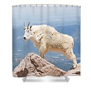 Mountain Goat Up High Shower Curtain