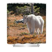 Mountain Goats Of Glacier Shower Curtain
