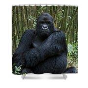 Mountain Gorilla Silverback Shower Curtain