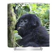 Mountain Gorillas Shower Curtain