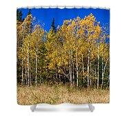Mountain Grasses Autumn Aspens In Deep Blue Sky Shower Curtain