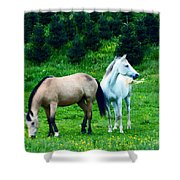 Mountain Horses Grazing  Shower Curtain