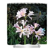 Mountain Lillies Shower Curtain