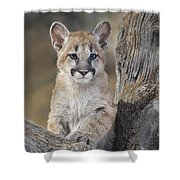 Mountain Lion Cub Shower Curtain