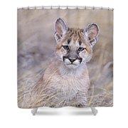 Mountain Lion Cub In Dry Grass Shower Curtain