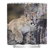 Mountain Lion Cub On Tree Branch Shower Curtain