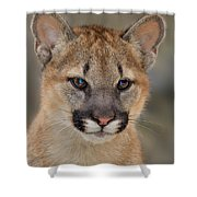 Mountain Lion Felis Concolor Captive Wildlife Rescue Shower Curtain