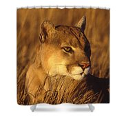 Mountain Lion Montana Shower Curtain
