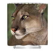 Mountain Lion Portrait Wildlife Rescue Shower Curtain