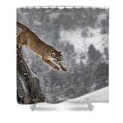 Mountain Lion - Silent Escape Shower Curtain by Wildlife Fine Art