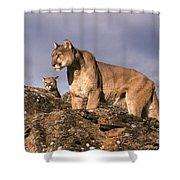 Mountain Lions Felis Concolor Shower Curtain