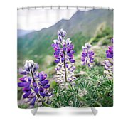 Mountain Lupine Shower Curtain