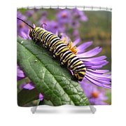 Mountain Monarch 2 Shower Curtain