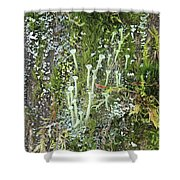 Mountain Moss Lichens And Fungi Shower Curtain