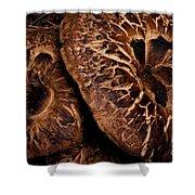 Mountain Mushrooms   #3670 Shower Curtain