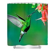 Mountain Velvetbreast Feeding Shower Curtain