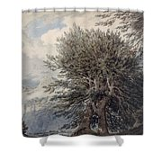 Mountainous Landscape With Beech Trees Shower Curtain