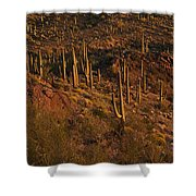 Mountainside Of Cacti Shower Curtain