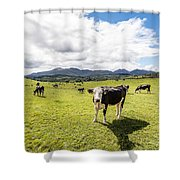 Mourne Cows Shower Curtain