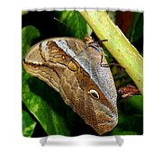 Mournful Owl Butterfly Shower Curtain