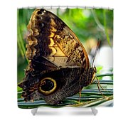 Mournful Owl Butterfly In Sunlight Shower Curtain