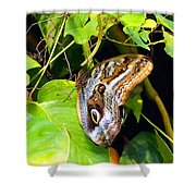 Mournful Owl Butterfly Wings Shower Curtain