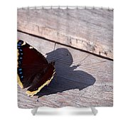 Mourning Cloak Shower Curtain
