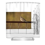 Mourning Dove Shower Curtain