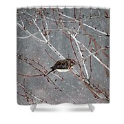Mourning Dove Asleep In Snowfall Shower Curtain