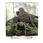 Mourning Dove Feeding Baby Dove Shower Curtain