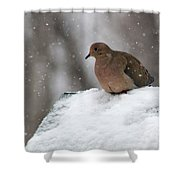 Mourning Dove In Snow Shower Curtain