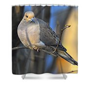 Mourning Dove On Limb Shower Curtain