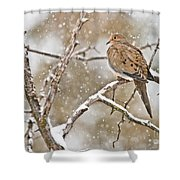 Mourning Dove Pictures 68 Shower Curtain